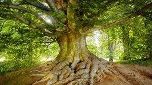 Picture of a tree, what to expect in your first counselling session